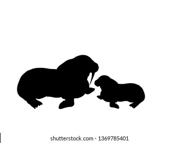 Walrus cub walrus arctic black silhouette animal. JPG illustration.