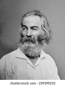 Walt Whitman (1819-1892) American poet, author, and journalist in portrait from Mathew Brady studio, ca.1863.