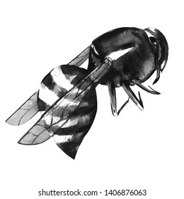 Wasp illustration. Wasp watercolor. Wasp realistic. Black and white .