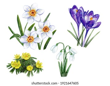 Water color hand draw spring flowers