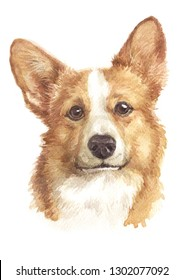 Water colour painting, Pembroke, Welsh Corgi dog, is a small dog. With legs and short tail