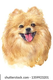 Water colour painting of Pomeranian