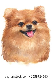 Water colour painting of Pomeranian [Puppy]