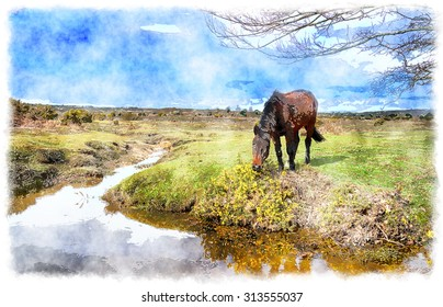 Water colour painting of a pony grazing on gorse in the New Forest