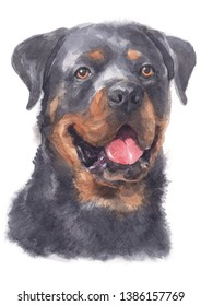 Water colour painting of Rottweiler 089