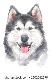 Water colour painting, Siberian husky dog with two layers of fur, good protection against cold.