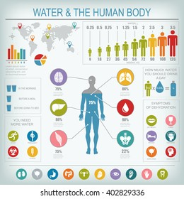 Water and human body infographic. Useful information about water. Concept of healthy lifestyle. Drink more water. Raster image.