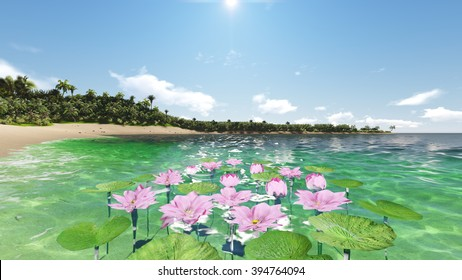 Water lilies, view of the tropical island and ocean