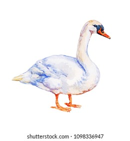 Waterbird goose isolated on white background watercolor illustration