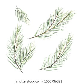 Waterco designer elements set collection of  forest pine green natural christmas tree needles branches greenery hand drawn in watercolor style. Decorative winter seasonal editable, isolated art