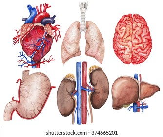 Human Body Parts Images, Stock Photos & Vectors | Shutterstock