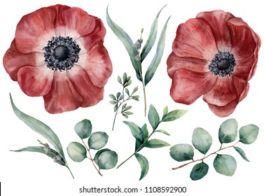 Watercolor anemone and eucalyptus big set. Hand painted red anemone, baby, seeded and silver dollar eucalyptus branch isolated on white background. Floral illustration for design, print, background.