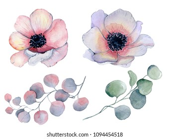Watercolor anemone flowers and leaves   Hand drawn illustration