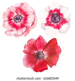 Watercolor anemone flowers set. Hand painted botanical elements isolated on white background. Artistic floral design clip art