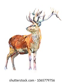 Watercolor animal deer isolated on white background