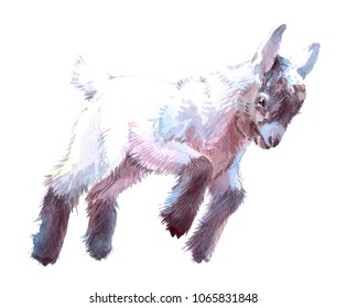 Watercolor animal goat baby isolated on white background