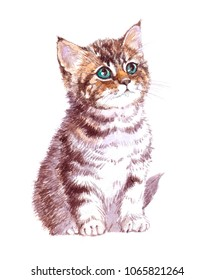 Watercolor animal kitten baby isolated on white background