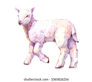 Watercolor animal lamb baby isolated on white background