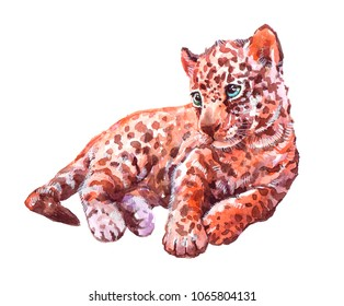 Watercolor animal leopard baby isolated on white background