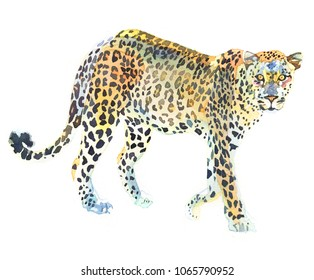 Watercolor animal leopard isolated on white background