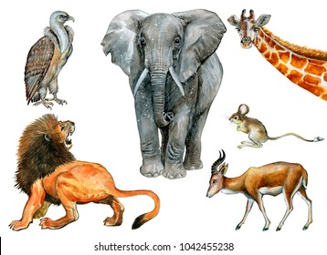 Watercolor animals set isolated on white.