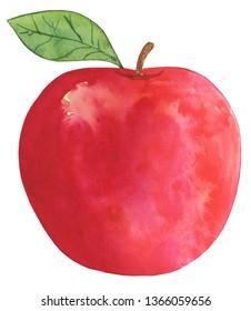 Watercolor Apple Illustration