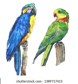 Watercolor ara blue-yellow macaw parrot. Green-red-yellow exotic parrot isolated on white illustration