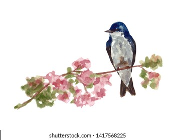 Watercolor art of beautiful portrait of Martin (Delichon urbicum) perched on single branch. Close-up small bird on white background. For posters, textile design, postcard and ornithology magazine.