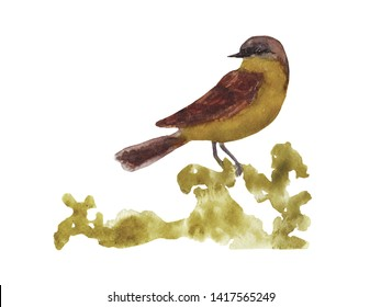 Watercolor art of beautiful portrait of Yellow Wagtail (Motacilla flava) perched on single branch. Close-up small bird on white background. For posters, textile design, postcard and ornithology site.
