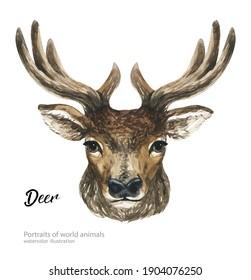 Watercolor art handmade portrait of animals isolated on white background. Watercolor hand-drawn illustration. Deer.  Design for T-shirt, invitation, wedding. Handmade illustration.