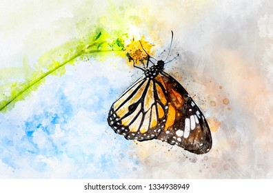Watercolor art painting of colorful butterfly feeding on little white flower