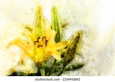 Watercolor art painting of yellow lily flowers