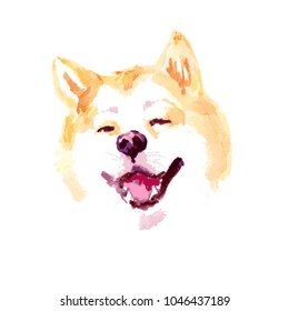 Watercolor artistic akita dog portrait isolated on white background. Hand drawn sibainu puppy smiling illustration.
