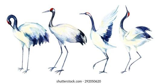 Watercolor asian crane bird set. Hand painted traditional illustration