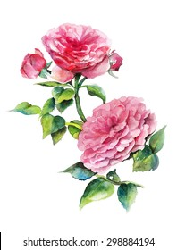Watercolor atrwork with pink roses. Hand drawn raster illustration