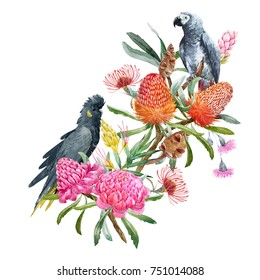 Watercolor  Australian floral bouquet. orange banksias flowers, seeds and leaves. gray parrot  and black cockatoo.  eucalyptus and  pink flowers ginger. palm leaves. tropical print