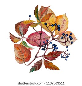 Watercolor autumn bouquet with autumn leaves and grapes. Stock Illustration on white background
