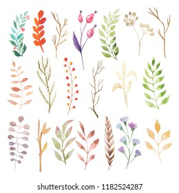 Watercolor autumn leaves, branches and plants set. Collection of hand drawn forest nature elemnts isolated on white iperfect for  design project