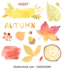 Watercolor autumn leaves, branches, textures and plants set. Collection of hand drawn forest nature elemnts isolated on white iperfect for  design project
