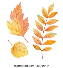 Watercolor autumn leaves on a white background for your  design.