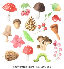Watercolor autumn mushrooms, berry, leaves, branches and plants set. Collection of hand drawn forest nature elemnts isolated on white iperfect for  design project