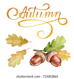 Watercolor autumn set of hand-drawn.  Clipart calligraphy and walnut acorn.