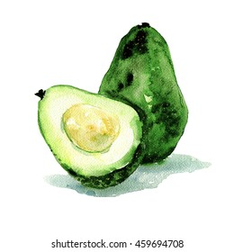 Watercolor; Avocado; Hand drawn; Isolated