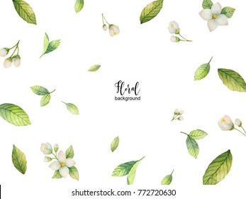 Watercolor background of flowers Jasmine and mint branches. Floral illustration for design greeting cards, wedding invitations, natural cosmetics, packaging and tea.