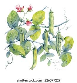 watercolor background peas