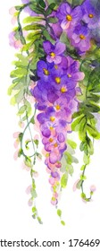 Watercolor background in the style of Japanese painting. Violet wisteria in blossom