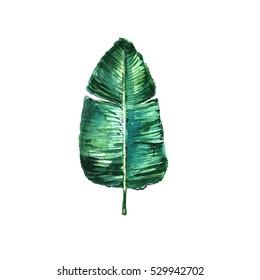 Watercolor banana leaf.