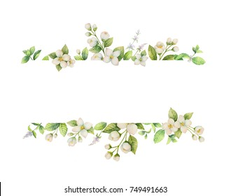 Watercolor banner of flowers Jasmine and mint branches isolated on white background. Floral illustration for design greeting cards, wedding invitations, natural cosmetics, packaging and tea.