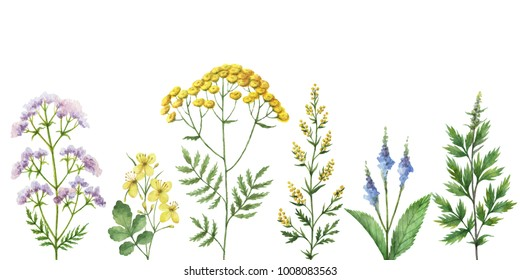Watercolor banner with medical plants. Healing Herbs for cards, wedding invitation, posters, save the date or greeting design. Summer flowers with space for your text.