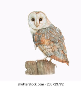 Watercolor barn owl on the dry tree